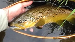 Still0004 2 300x168 Farmington fly fishing Memorial Day Weekend 6/1/11